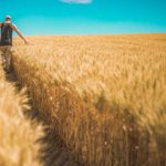 Nawozy organiczne – perfekcyjna alternatywa?